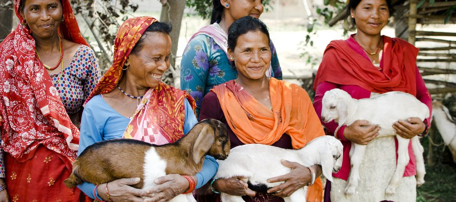 A self-help group in Nepal who are earning money through goat farming