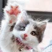 cat-claw.jpeg